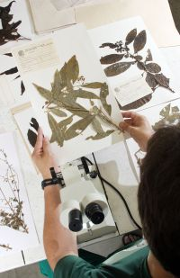 In the herbarium, Brazil
