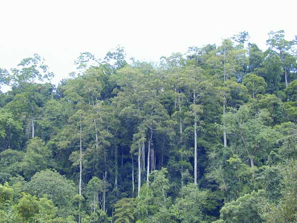 Xishuangbanna tropical rainforest
