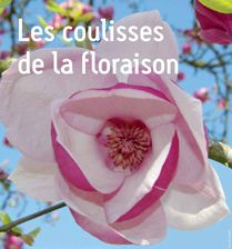 Coulisses de la floraison