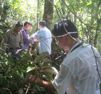 magnolia field survey in china