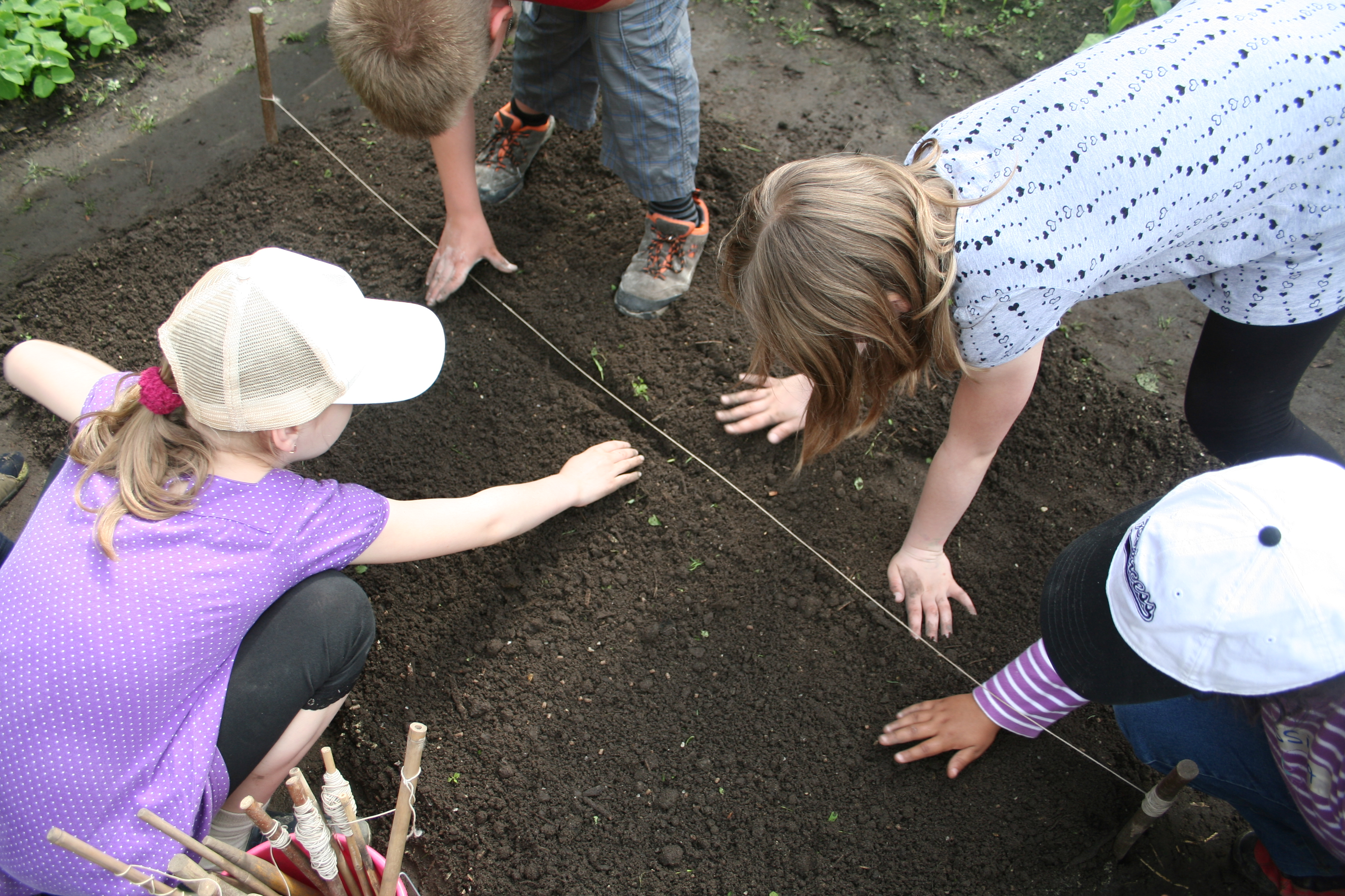 School children planting vegetables (School Biology Centre Hannover)