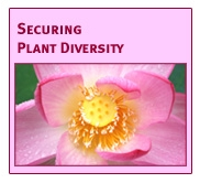 Securing Plant Diversity