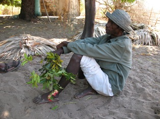local man with medicinal plants