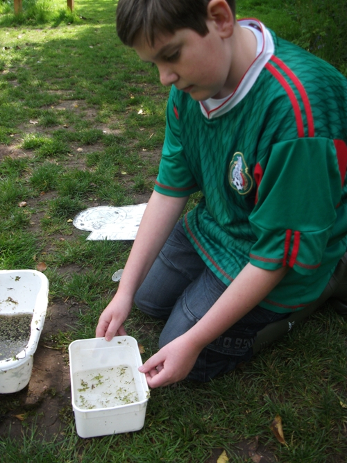 Identification of pond dipping creatures
