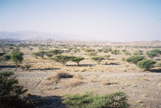 Oman natural vegetation