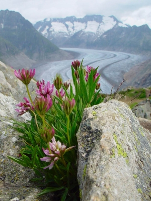 Alpines are forced to climb but soon there will be nowhere left go