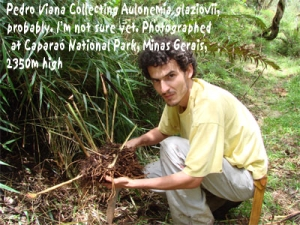 Pedro Viana discovers more about bamboo