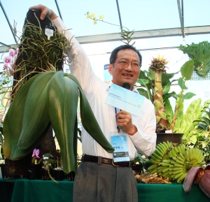 Dr Chia-Wei Li and his huge Bulbophyllum