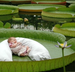 Lorene Corbanie takes a nap on a giant water lily