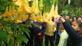 calvijero ethnobotanic plants