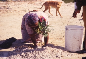 Woman bending to plant (image BGCI).